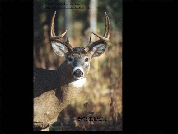 buck-2.jpg